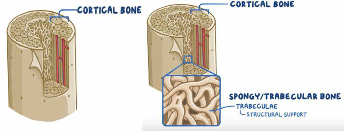 Osteoporosis Day October